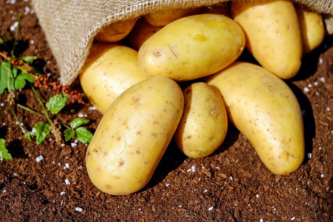 Les pommes de terre peuvent augmenter le risque de malformations congénitales